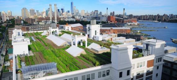 O ferm? pe un acoperi? în New York cre?te anual 23 de tone de produse ecologice