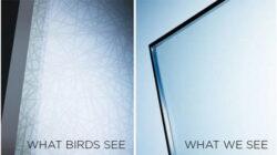 Oamenii de stiinta au inventat sticla pe care o vad doar pasarile
