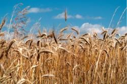 Studiu: poluarea atmosferica poate afecta valoarea nutritiva a alimentelor