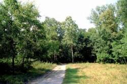 Padurea Letea, deschisa turistilor