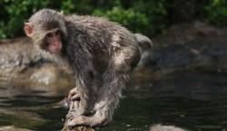 Macacii, antrenati sa protejeze de pasari o baza aeriana chineza