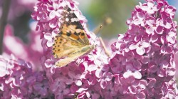 5 minuni ale naturii mai putin cunoscute de romani