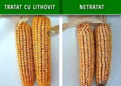 Cea mai noua tehnologie de fertilizare in cultura cerealelor, fertilizarea cu CO2