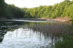 Miliarde platite pentru Lacul cu nuferi