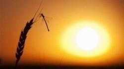 Cresterea concentratiei CO2 atmosferic, amenintare directa pentru hrana oamenilor