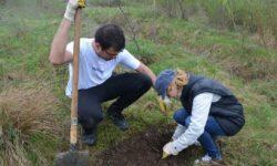 Voluntarii au plantat peste 54.000 de copaci in zonele cu risc de alunecare