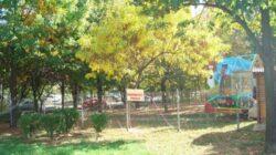 Piedone explica pe Facebook de ce se defriseaza copacii din Parcul Tineretului