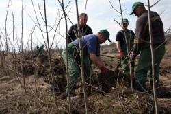 Costurile de amenajare a pepinierei care se va intinde pe 0,9 hectare la Rasnov, estimate la 2,14 milioane de lei