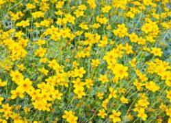 Plante care rezista la seceta