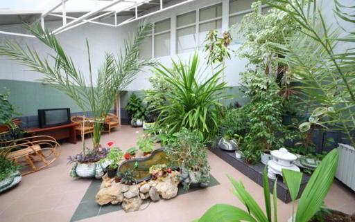 8 motive pentru care ar trebui sa-ti iei plante de apartament