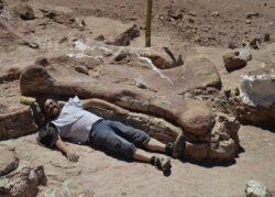 Fosilele celui mai mare animal care a trait vreodata pe Terra, gasite in Argentinax