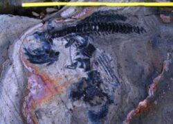 Topirea ghetarilor: Apar fosile de reptile preistorice!