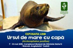 Ursul de mare, la Stiintele Naturii