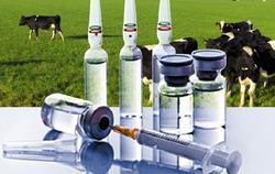 Incepe campania de vaccinare a animalelor impotriva antraxului
