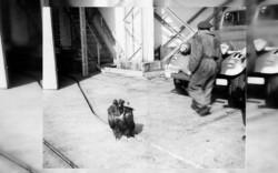 Vulturul Ilie, zaganul-legenda al Buzaului