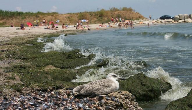 Deputatul Gheorghe Dragomir propune noi măsuri de protecţie a mediului
