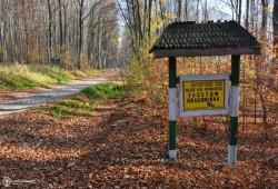 Rezervatiile naturale: Fagetul Dragomirna si Padurea (Quercetumul) Crujana