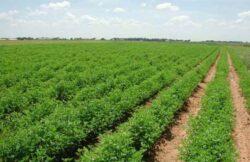 Enel Cuore promoveaza proiecte pentru dezvoltarea sustenabila a horticulturii