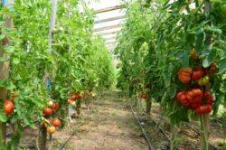 Vrei sa faci agricultura ecologica? Afla informatii utile aici