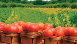 Termenul de inregistrare a operatorilor in sistemul de agricultura ecologica este 30 iunie.