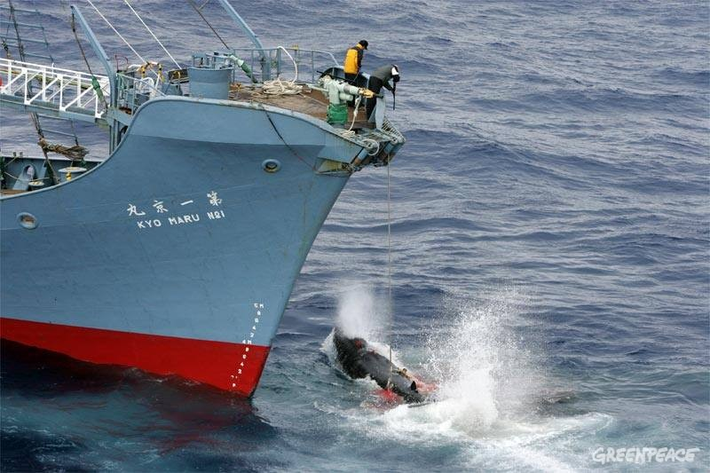 Premierul Japoniei: Voi face tot posibilul pentru a relansa vanatoarea de balene