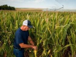 Mii de fermieri si procesatori asteapta o solutie pentru deseurile generate si energie termica cu cost mai mic