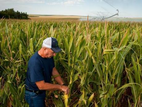 Mii de fermieri şi procesatori aşteaptă o soluţie pentru deşeurile generate şi energie termică cu cost mai mic