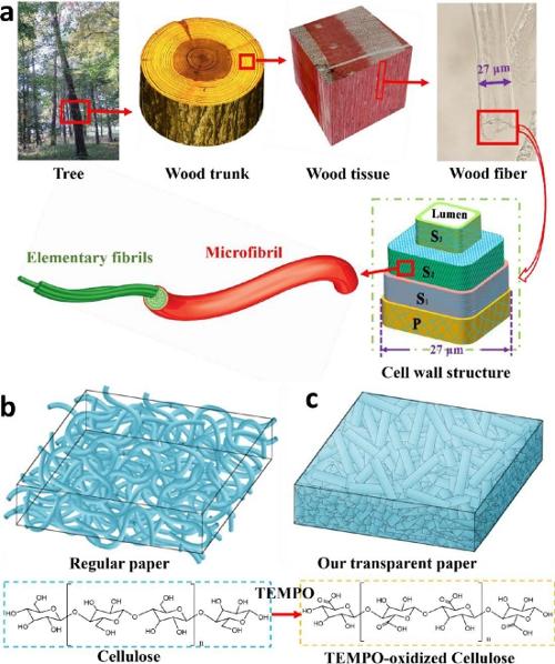 Viitoarele celule solare ar putea fi realizate din fibre de lemn