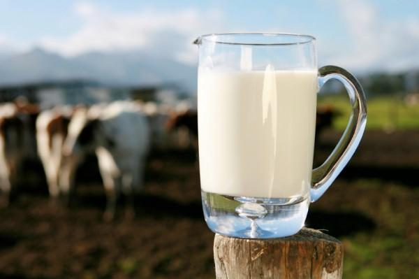 Laptele, iaurtul, branza, ouale si produsele din carne provin de la animale hranite cu furaje modificate genetic