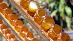 Laptisorul de matca, remediul natural din partea albinelor