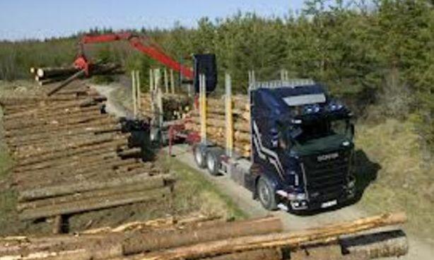Afaceristii cu lemn, nout?ti legislative