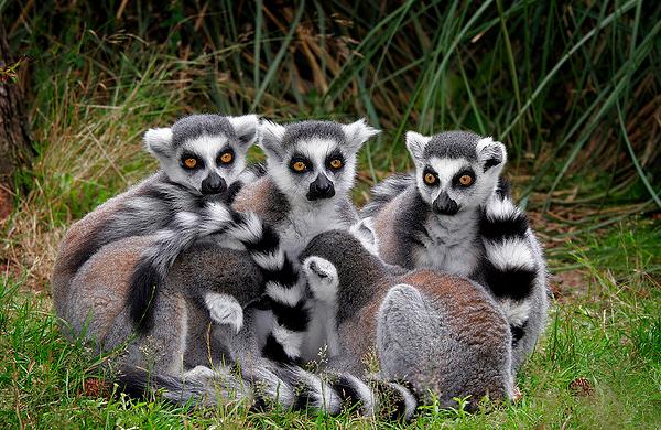 Noi specii pe cale de disparitie