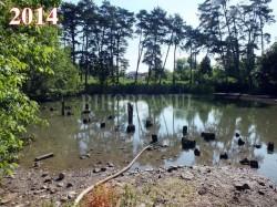 a sa nu sece de tot, din 2012 lacul Ochiul Mare din Rezervatia Petea este alimentat artificial cu apa geotermala, printr-un furtun. Oscilatiile nivelului si ale temperaturii apei au dus la disparitia, poate pentru totdeauna, a nufarului termal