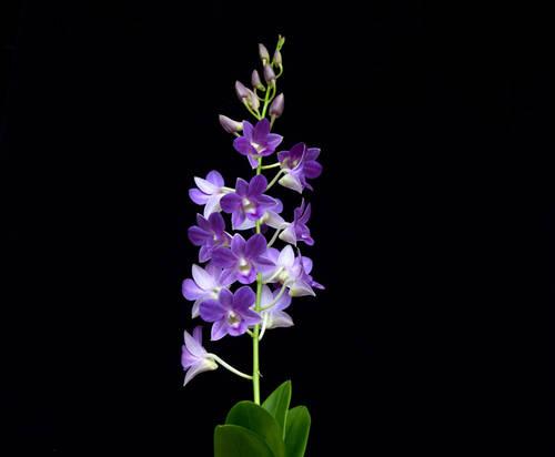 Vezi unde tr?ie?te orhideea care îi poart? numele organiza?iei UNESCO