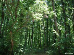 Primarii localitatilor bacauane unde urmau sa fie restituite 43.000 ha padure au amanat punerea in posesie