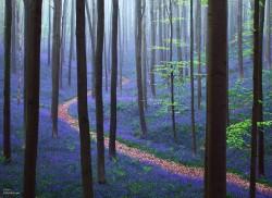 Padurea cu albastrele din Belgia, minunatie a naturii de o frumusete rara!