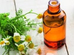 Plantele, speranta sau amagire in tratamentul cancerului?