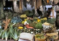Ce vitamine si minerale contin plantele medicinale