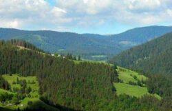 Romsilva: Prima impadurire, o masura speciala pentru PNDR 2014-2020