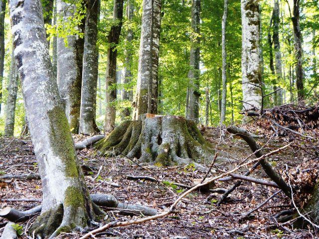 Mafia retrocedarilor: Cate hectare de padure a recuperat Romsilva in instanta