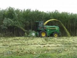 Rampele de gunoi ale Brasovului, cultivate cu salcii energetice si salcami