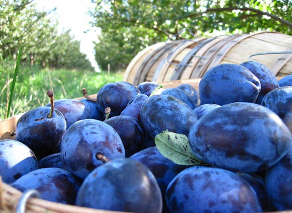 Un studiu german arata ca prunele combat o maladie care ucide milioane de oameni