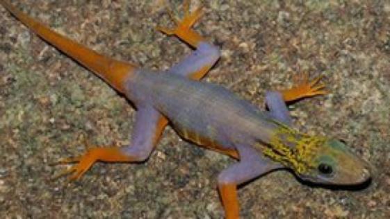 Peste 300 de noi specii de animale si plante