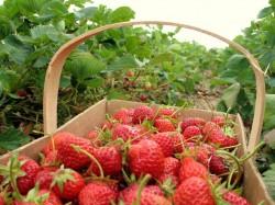 Agricultura ecologica – naturala, sigura si oportuna