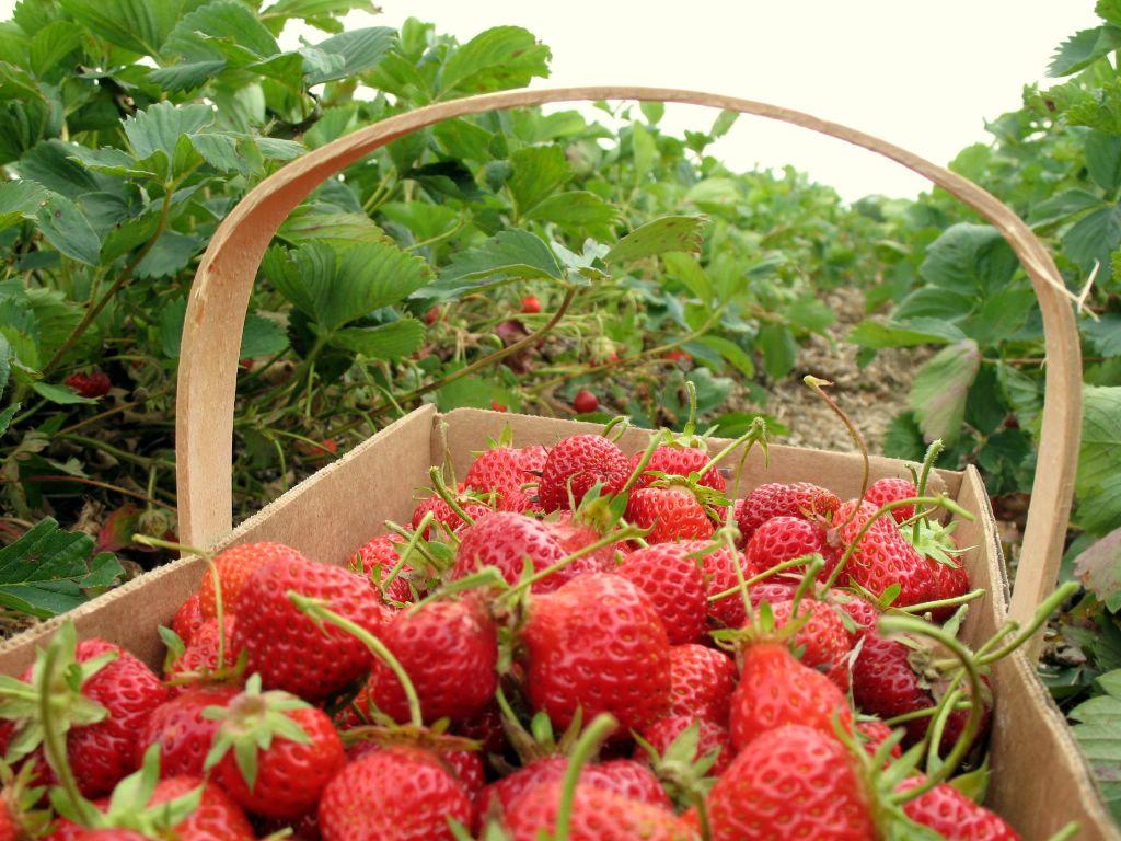 Agricultura ecologică – naturală, sigură și oportună