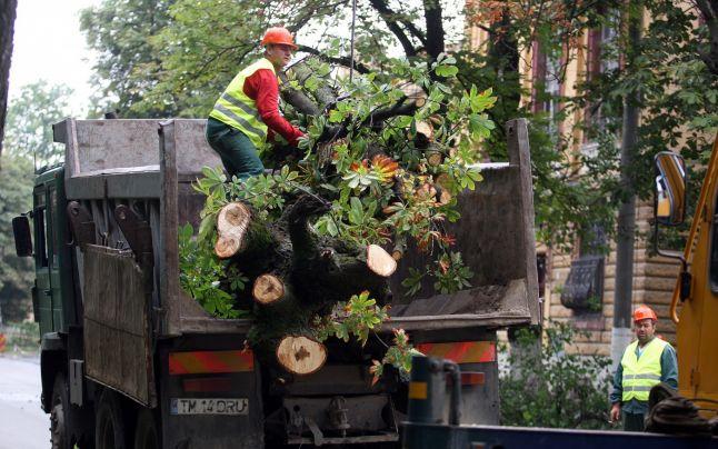 T?ierea arborilor s?n?to?i din spa?iile verzi, doar cu avizul agen?iilor de mediu