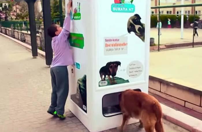 De?euri reciclate ?i câini s?tui