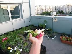 Gradina de legume, sanatatea de pe acoperisul unui bloc din Bucuresti