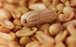 Consumul zilnic de alune reduce riscul aparitiei bolilor cardiace