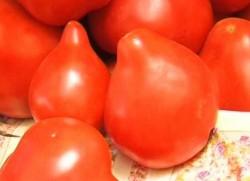 Cercetatorii in legumicultura avertizeaza ca tomatele cu tugui sunt periculoase pentru organism